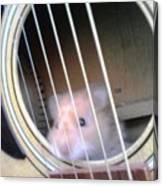 Hamster Strings Canvas Print