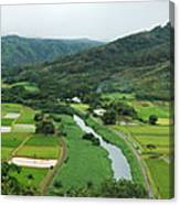 Hanalei Taro Fields Canvas Print