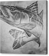 Hand Drawn Snook  Canvas Print