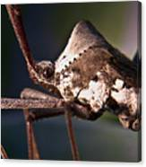 Handsome Bug Canvas Print