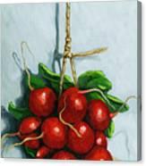 Hanging Around - Radishes Still Life Painting Canvas Print