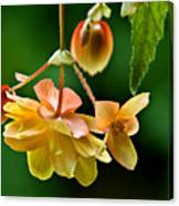 Hanging Flower Canvas Print