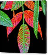 Hanging Green And Red Leafs... Canvas Print