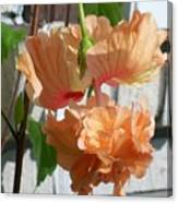 Hanging Hibiscus Canvas Print
