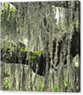 Hanging Moss Canvas Print