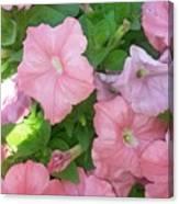Hanging Pink Petunias Basket Canvas Print
