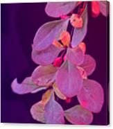 Hanging Purple Canvas Print