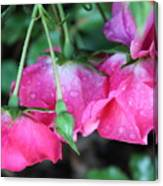 Hanging Roses Canvas Print