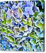 Hanson Hydrangea Canvas Print