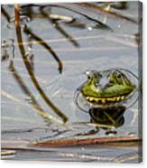 Happy As Afrog Canvas Print