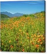 Happy Days In Walker Canyon Canvas Print