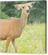 Happy Deer Canvas Print