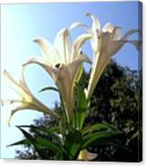 Happy Easter Lilies Canvas Print