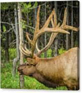 Happy Elk Canvas Print