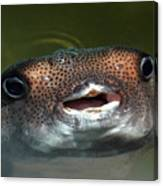 Happy Fish Canvas Print