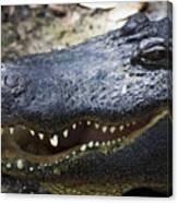 Happy Florida Gator Canvas Print