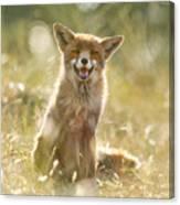 Happy Fox Is Happy Canvas Print