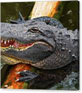 Happy Gator Canvas Print