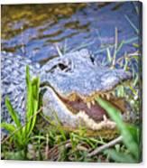 Happy Gator Canvas Print