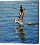 Happy Landing Pelican Canvas Print