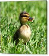 Happy Lil Duck Canvas Print
