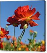 Happy Mother's Day Flowers Canvas Print