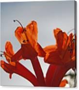 Happy Orange Canvas Print