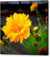Happy Spring Flower Canvas Print