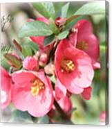 Happy Spring Flowering Quince Card And Poster Canvas Print