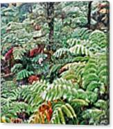 Hapu'u Fern Rainforest Canvas Print