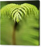 Hapuu Fern Canvas Print