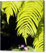 Hapuu Ferns Canvas Print
