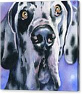 Harlequin Great Dane Canvas Print