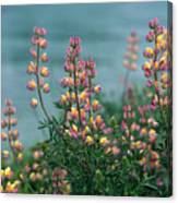 Harlequins In Harmony Canvas Print