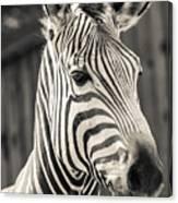 Hartmann's Mountain Zebra 2 Canvas Print