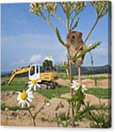 Harvest Mouse And Backhoe Canvas Print