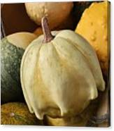 Harvest Of Gourds Canvas Print