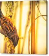 Harvest Time II Canvas Print