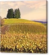 Harvest Time In A Vineyard Canvas Print