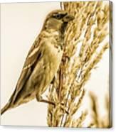 Harvest Time Iv Canvas Print