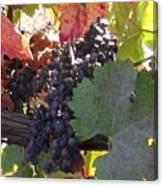 Harvest Time Canvas Print