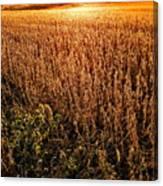 Harvest Twilight Canvas Print