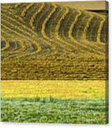 Harvested Fields Of The Palouse Canvas Print