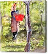 Harvesting Anna's Grapes Canvas Print