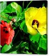 Hau Tree Blossoms Canvas Print