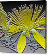Have A Flower Canvas Print