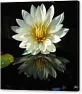 Haven Hospice Water Lily Canvas Print