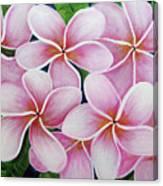 Hawaii An Tropical Plumeria Flower #338 Canvas Print