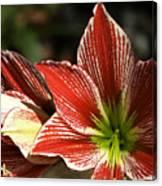 Hawaii Flora 11 Canvas Print
