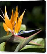 Hawaii Flora 13 Canvas Print